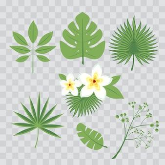 Vector conjunto de hojas tropicales. hoja de palmera, hoja de plátano, hibisco, flores de plumeria. árboles de la selva. ilustración floral botánica. conjunto de vectores de moda ilustraciones aisladas en transparente a cuadros.