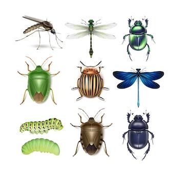 Vector conjunto de mosquitos de diferentes insectos, libélulas, escarabajo de la patata de colorado, escarabajos, chinches apestosas verdes y marrones, vista superior de orugas aislada sobre fondo blanco