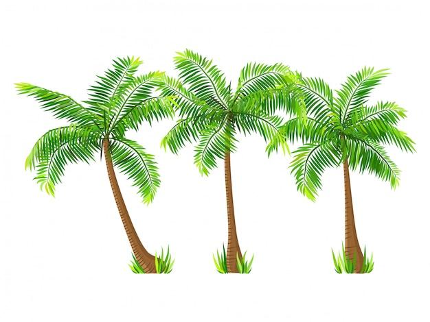 Vector conjunto de palmeras de coco aislado en blanco