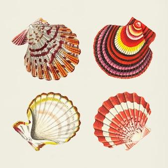 Vector conjunto vintage de pegatinas coloridas conchas marinas