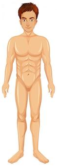Un vector del cuerpo del hombre