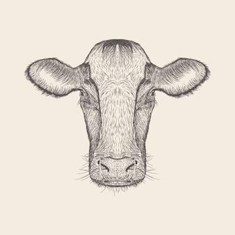 Vector dibujado mano del ejemplo de la cabeza de la vaca.