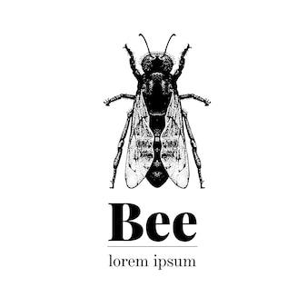 Vector dibujado a mano ilustración de abeja. plantilla de logotipo de estilo retro.