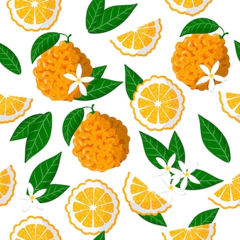 Vector de dibujos animados de patrones sin fisuras con citrus aurantium o frutas exóticas de naranja amarga, flores y hojas