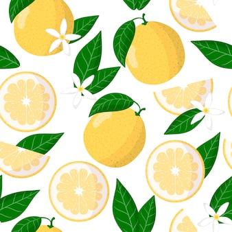 Vector de dibujos animados de patrones sin fisuras con citrus grandis citrus paradisi o citrus sweetie frutas exóticas, flores y hojas