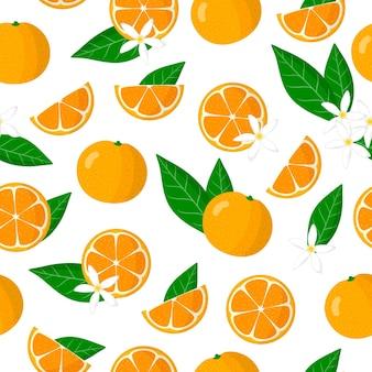 Vector de dibujos animados de patrones sin fisuras con citrus microcarpa o citrofortunella frutas exóticas, flores y hojas