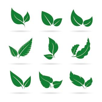 Vector de diseño de conjunto de iconos de hojas verdes sobre fondo blanco naturaleza