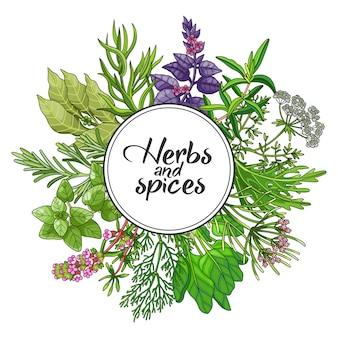 Vector diseño redondo verde con especias y hierbas