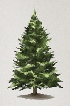 Vector de elemento de árbol abeto del himalaya occidental