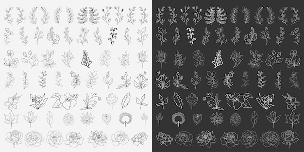 Vector de elementos florales dibujados a mano