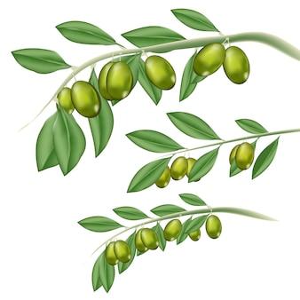 Vector de fruta argan