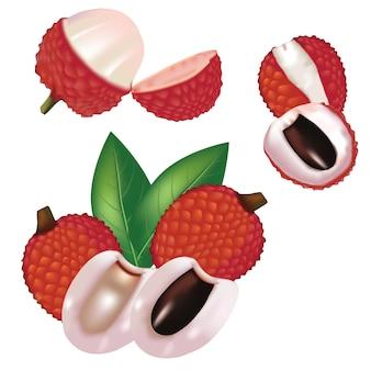 Vector de fruta de lychee