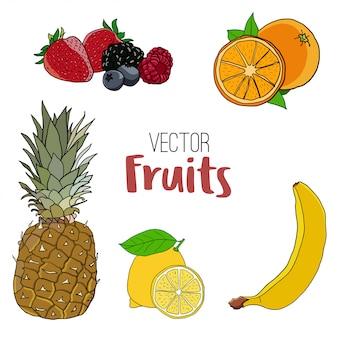 Vector de frutas y bayas