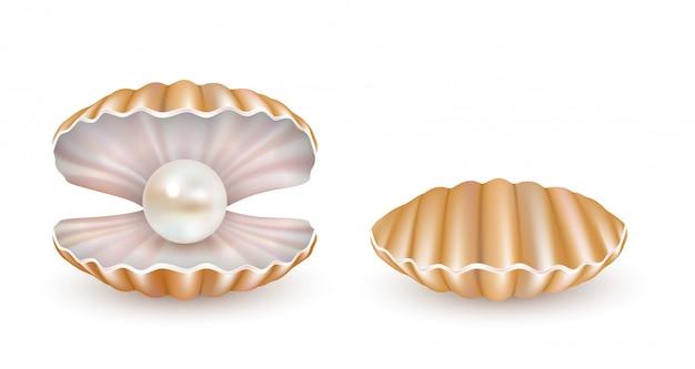 Vector hermosa concha de perla aislada
