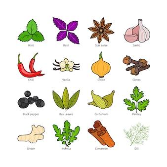 Vector de hierbas y especias