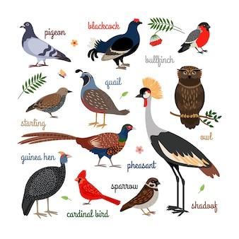Vector iconos de aves