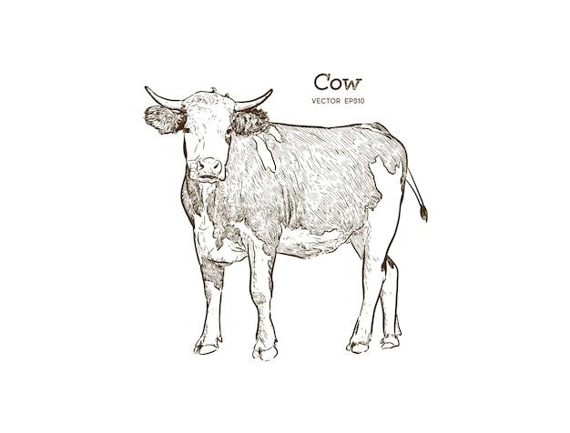 Vector de ilustración de dibujo de vaca