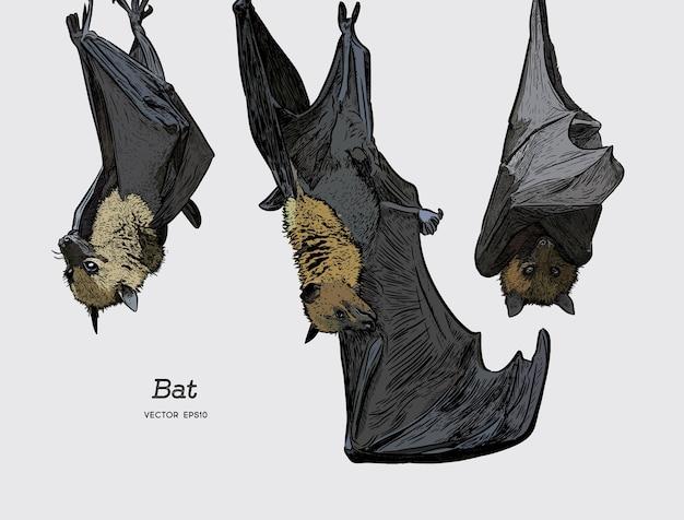 Vector de ilustración de murciélago.