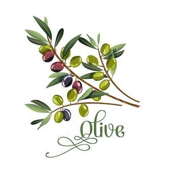 Vector ilustración realista de la rama de aceitunas negras y verdes