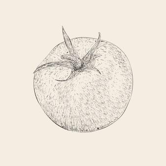 Vector de ilustración de tomate dibujado a mano