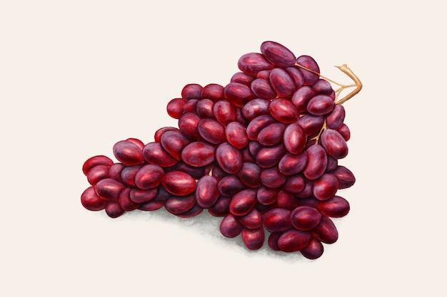 Vector de ilustración vintage de uvas rojas