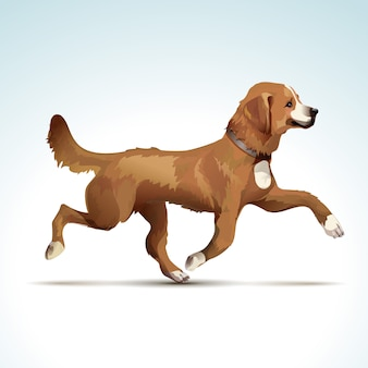 Vector labrador retriever perro