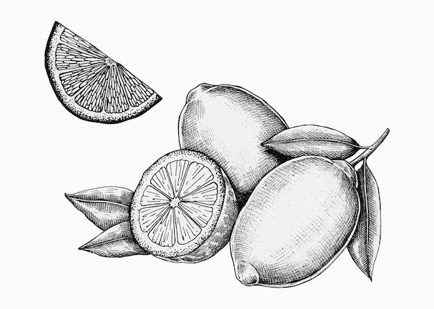Vector de limones frescos dibujados a mano