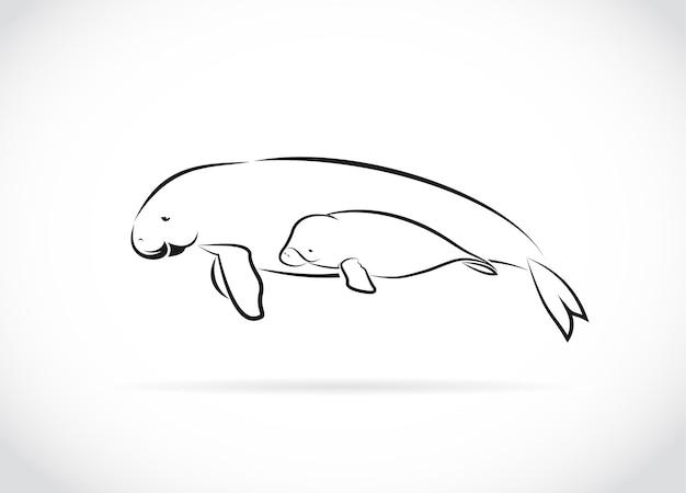 Vector de madre dugong y bebé dugong diseño sobre fondo blanco animales salvajes