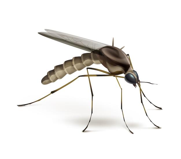 Vector mosquito cerrar vista lateral aislado sobre fondo blanco.