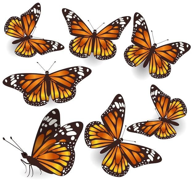 Vector, naranja, tropical, vuelo, mariposas, aislado, ilustración, conjunto
