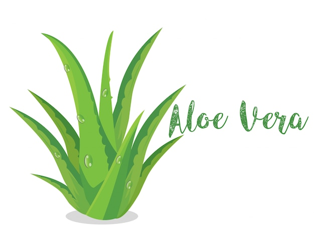 Vector de la planta de aloe vera en bsckground blanco