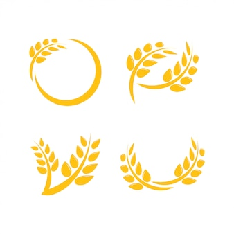 Vector de plantilla de diseño gráfico de agricultura de trigo