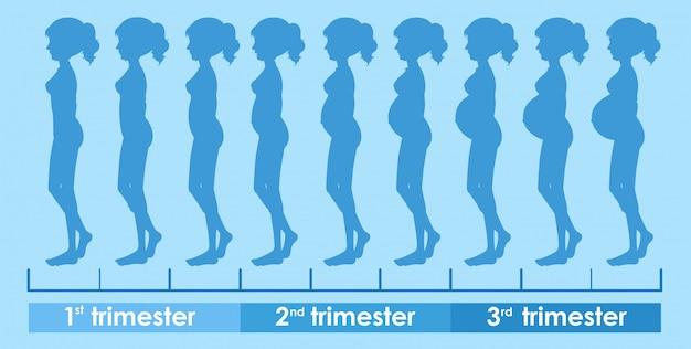 Un vector del progreso del embarazo