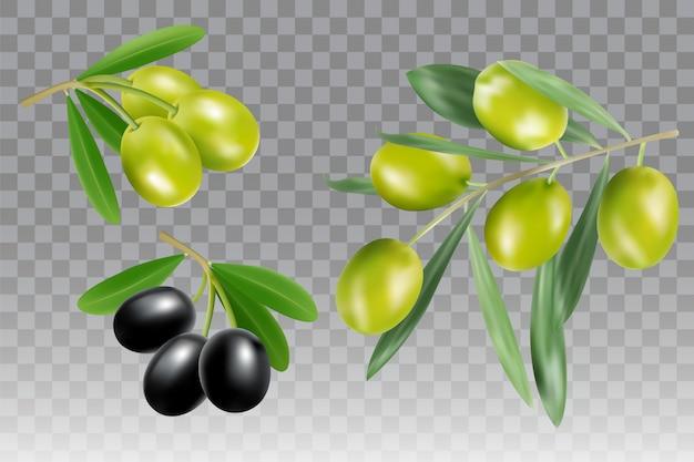 Vector de rama de olivo negro y verde aislado