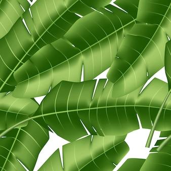 Vector realista tropical deja vacaciones exóticas