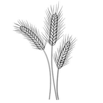 Vector de tinta dibujada a mano de orejas de trigo