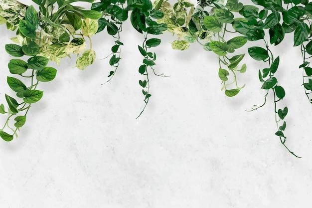 Vector tropical de papel tapiz de fondo de hoja, planta de interior verde