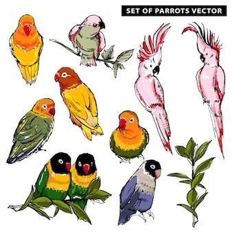 Vector de verano dibujado a mano de hermosos loros tropicales exóticos