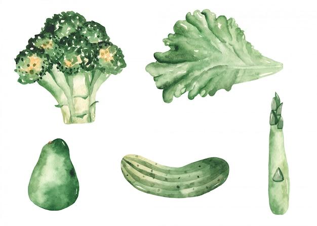 Vegetales verdes en estilo acuarela
