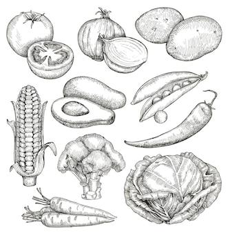 Verduras, bocetos, dibujo a mano, conjunto de vectores