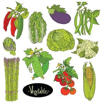 Verduras frescas conjunto berenjena, repollo, pimientos, frijoles, tomate, pepino, espárragos, coliflor, alcachofa, lechuga, maíz