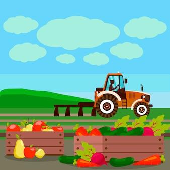 Verduras, frutas en la ilustración vectorial de campo