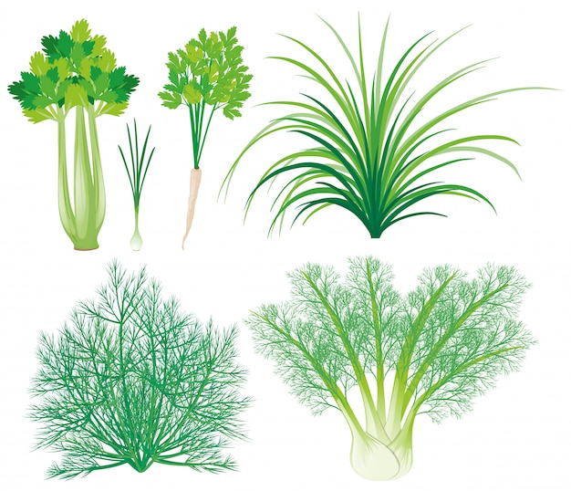 Verduras con hojas verdes