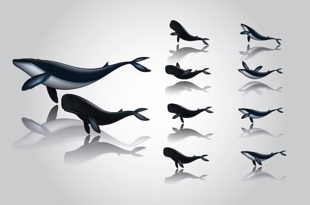 Vestidos de ballena de dibujos animados natación de varios estilos.