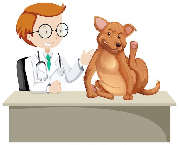 Veterinario con animal enfermo