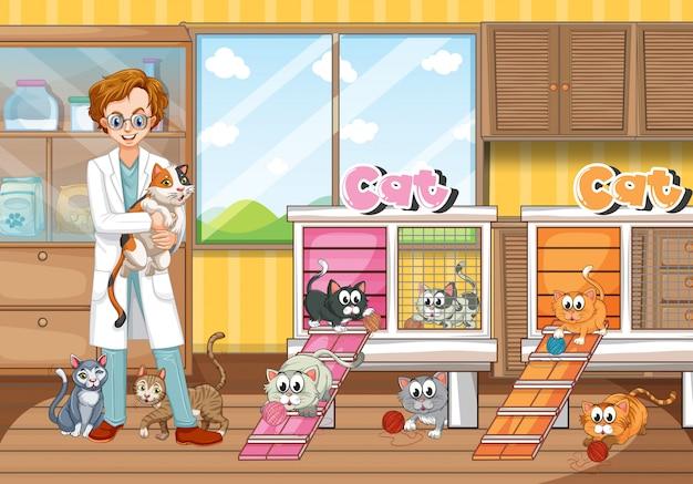 Veterinario y gatos en clínica.