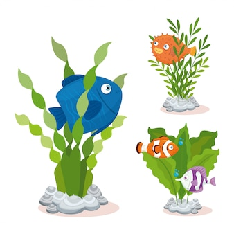Vida submarina del mar, peces con algas sobre fondo blanco.