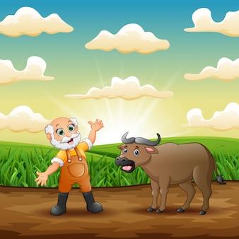 Viejo granjero con su búfalo en el campo de hierba