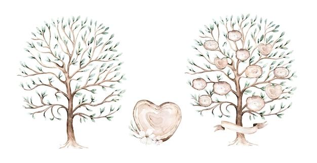 Un viejo y hermoso olivo extraído, dibujado a mano - ilustración acuarela
