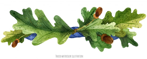 Viñeta de hojas de roble con lazo de seda azul.